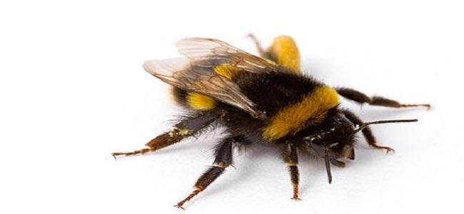 Scenariusz Zajęć W Przedszkolu Pszczoły Mamydziecipl