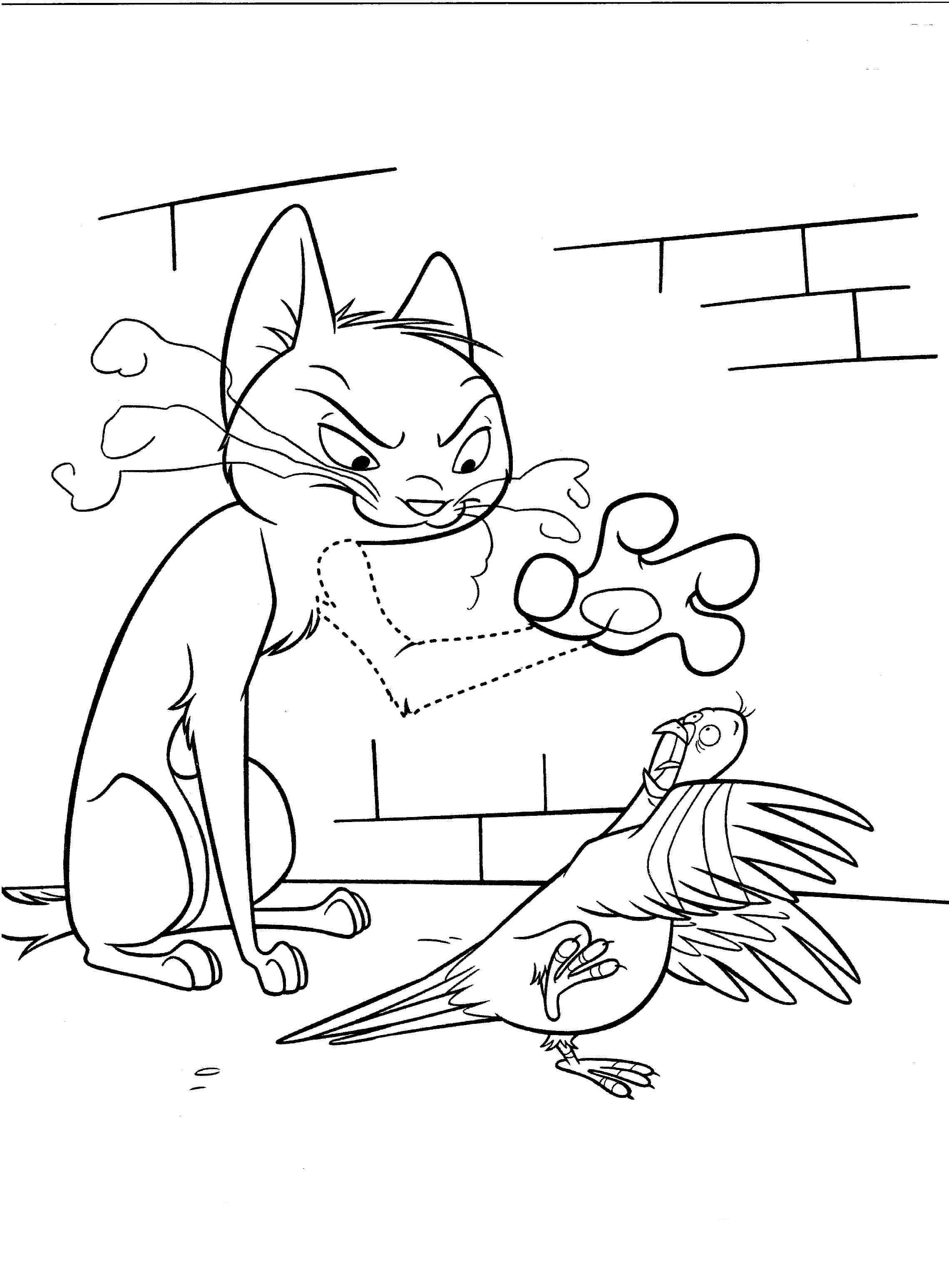 Kot I Gołąb Kolorowanka Piorun Mamydziecipl