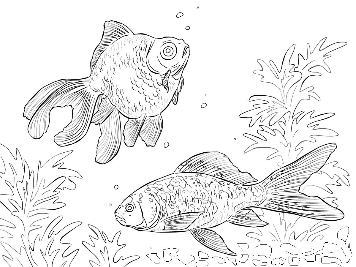 Kolorowanki ryby i malowanki do druku for Pesce rosso butterfly