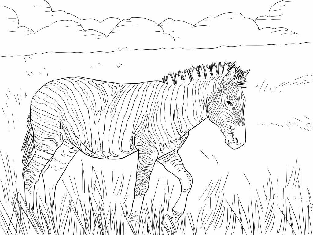 zebra kolorowanka  mamydziecipl