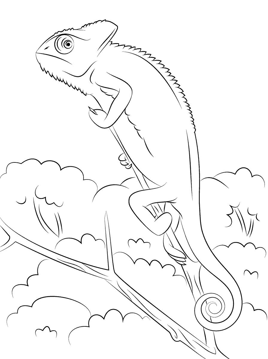 jaszczurka kameleon  mamydziecipl